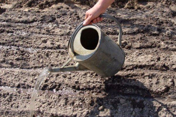 Полив почвы гуминовым раствором