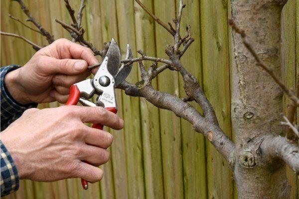 Обрезать дерево
