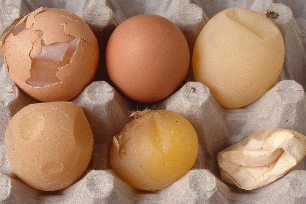 Варианты патологии скорлупы яиц при ССЯ-76
