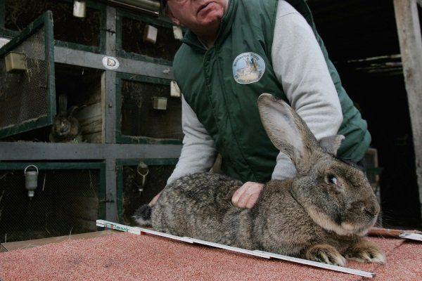 Кролик на убой