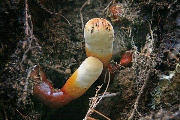 Созревание гриба