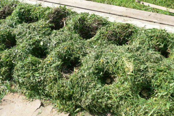 Использование скошенной травы