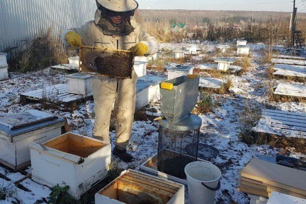 Пересадка пчёл