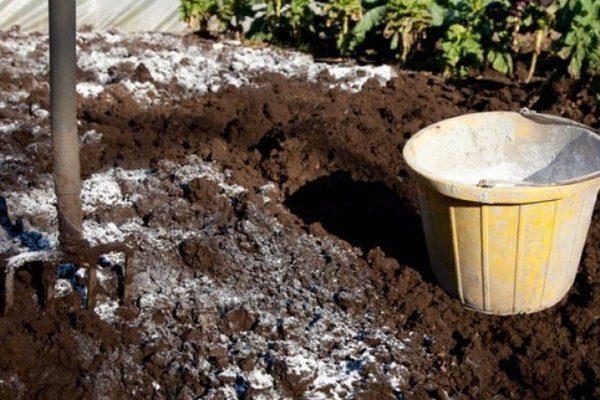 Мульчирование почвы известью
