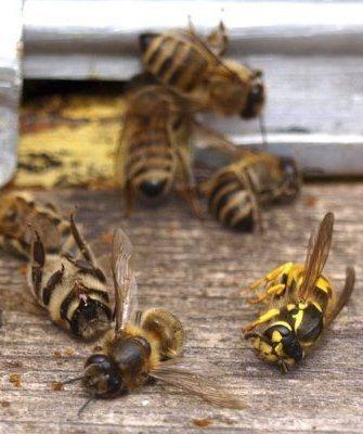 Солевое отравление пчел