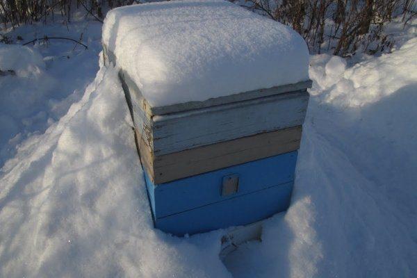 Организация зимовки пчел