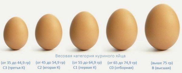 Маркировка размеров куриных яиц