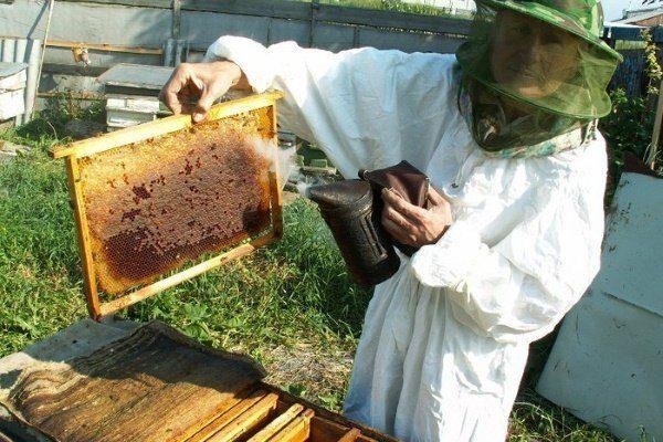 Пчеловод и рамка с мёдом