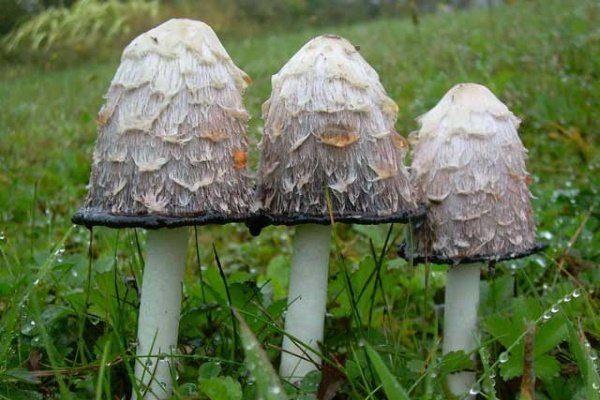 Какие грибы растут в Крыму?