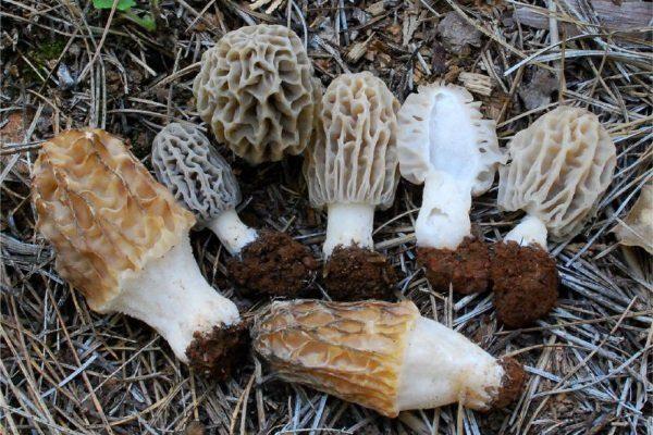 Сорванные грибы