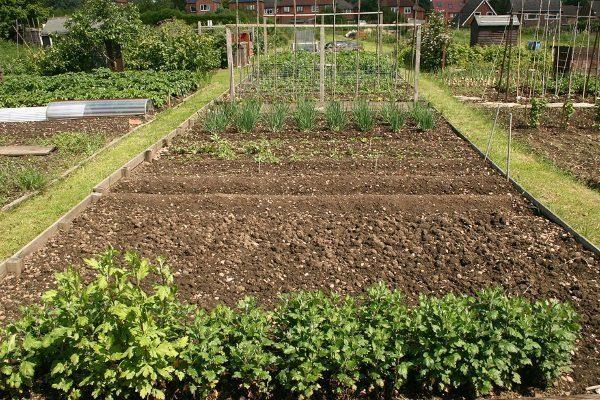Огород для посадки культур