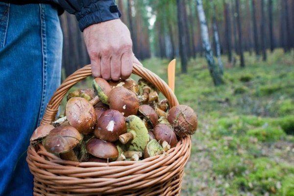 Башкирия грибы