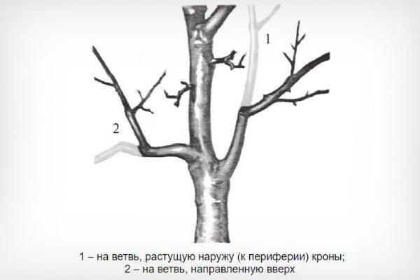 Обрезка (укорачивание) на перевод