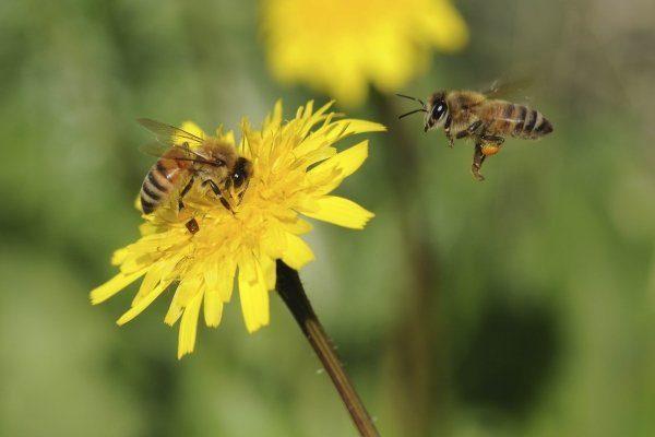 Пчелы на Украине