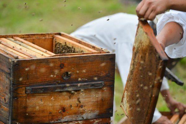 Пчеловодство в России