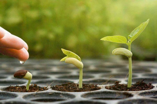 Вегетация