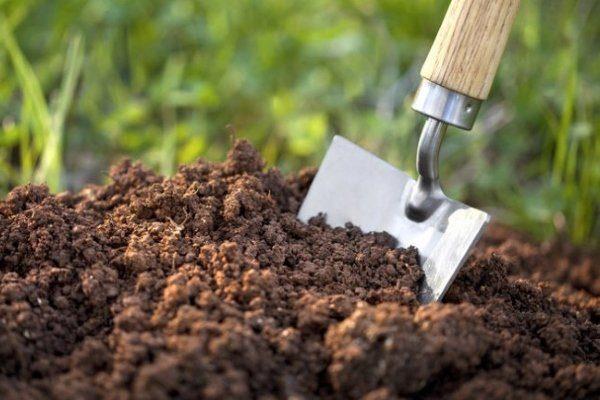 Выбор места посадки картофеля