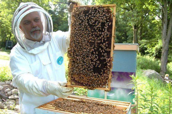 Советы пчеловодам