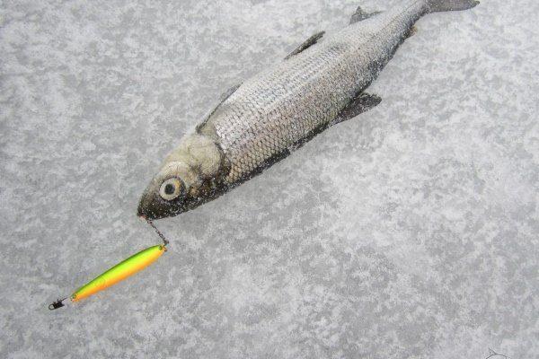 Зимняя рыбалка на рипуса