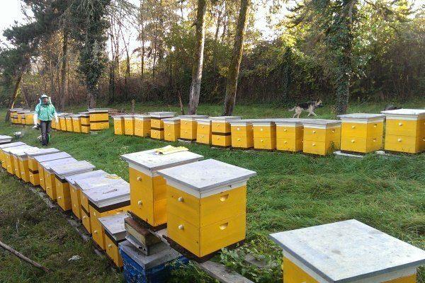 Развитие пчеловодства в Украине