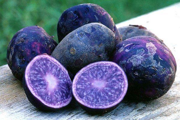 Польза фиолетового картофеля