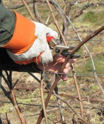 александр гришунин обрезка винограда супер