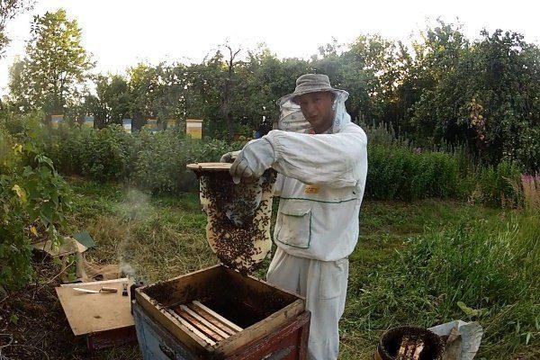 Пасечник вылавливает пчёл