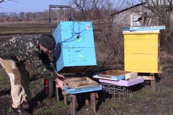 Выставление пчёл из зимовника