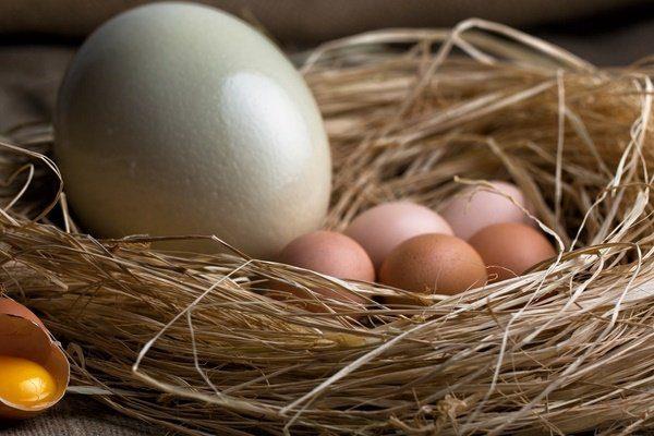 Употребление страусиных яиц