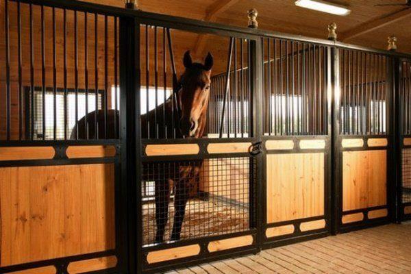 Гнедой конь Андалузской породы в конюшне