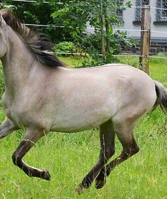 Конь с мышастым окрасом