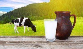 Корова и молоко