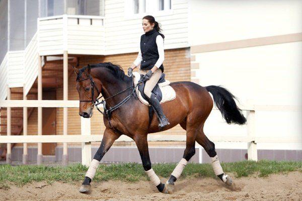 Выездка лошади: лучшие породы для обучения