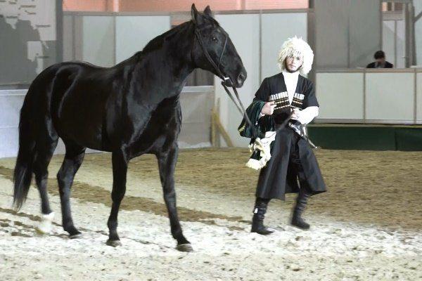 Спортивная жизнь лошади