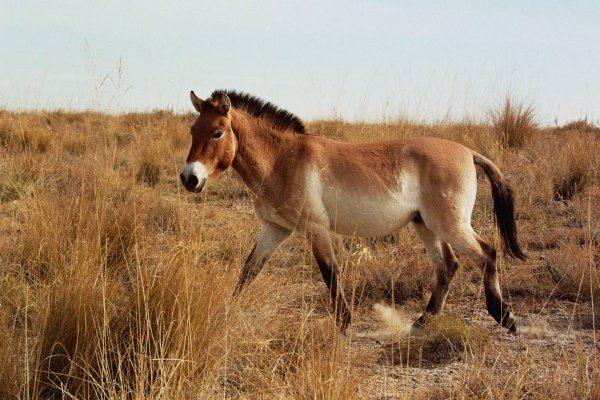 Лошадь на выгуле