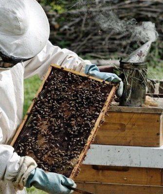 Проверка пчелосемьи