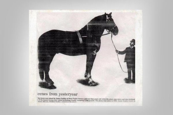 Лошадь Марокко
