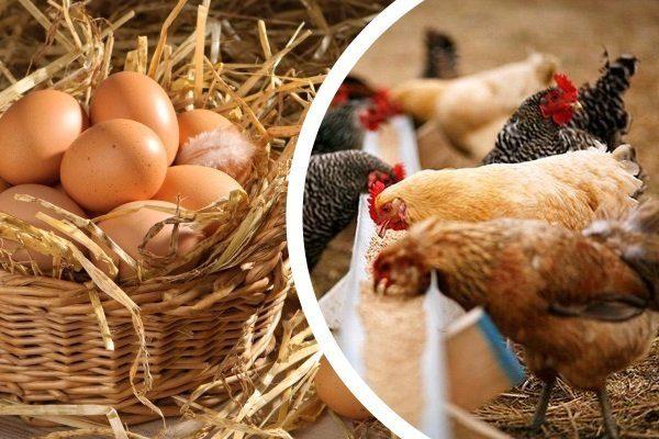 Какие витамины нужны для цыплят