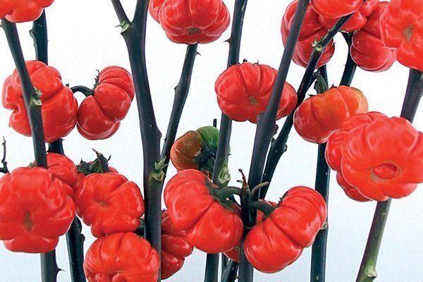 баклажаны Китайский фонарик