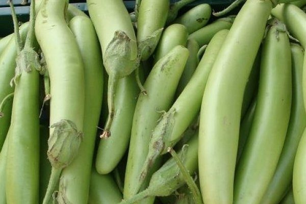 Баклажан Тайский зеленый