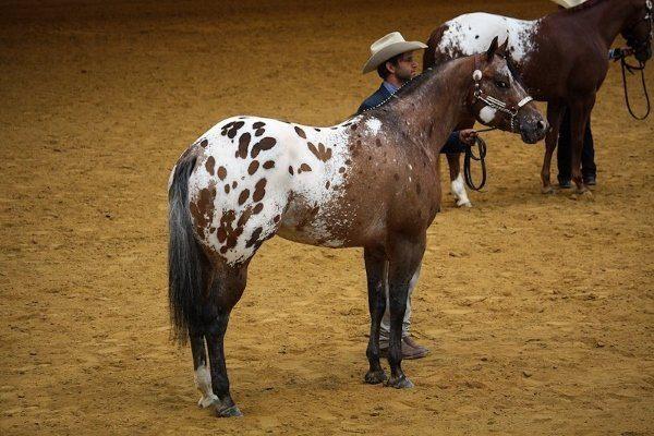 Соревнование лошадей