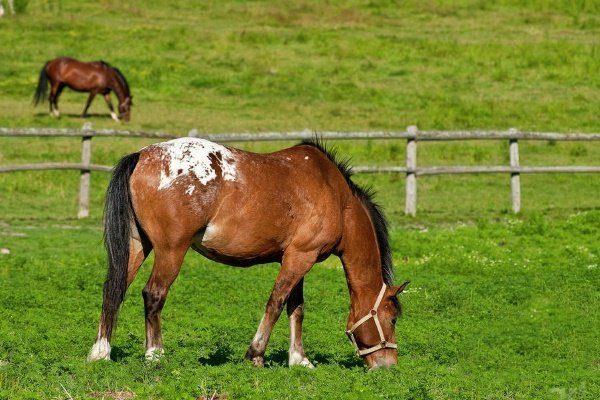 Лошадь пасётся