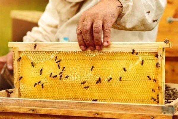 Пчёлы строят соты