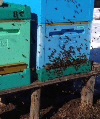 Весенний облёт пчёл
