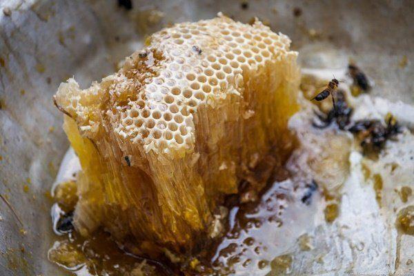 Дикий мёд