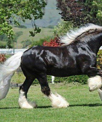 Прогулка лошади