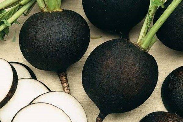 Зимняя черная редька круглая