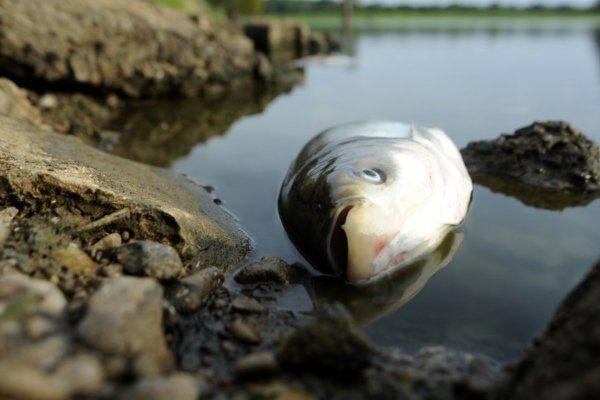 Рыба выбросилась на берег