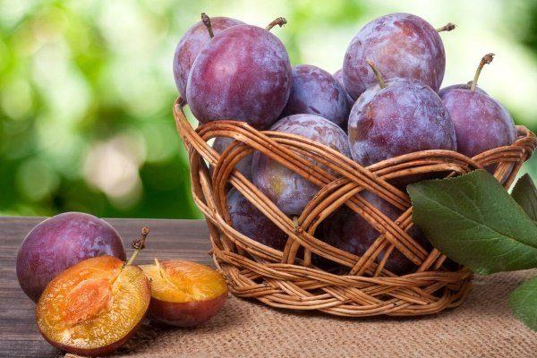 Особенности выращивание сливы сорта Яичная синяя