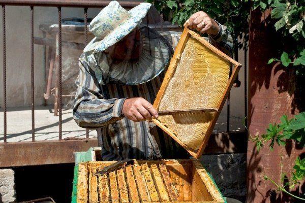 Пчеловод и рамка
